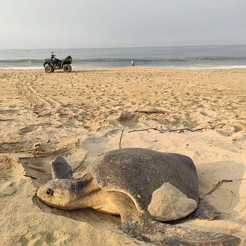 tortugas_cuerpo_3